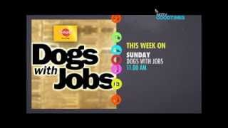 Meet the Dogs with Jobs -- Bonita, Lily, Wheely Willy