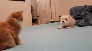 Funny cats and dogs. Funny animals