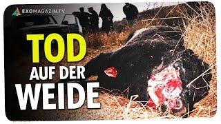 TOD AUF DER WEIDE - Das Rätsel der Viehverstümmelungen | ExoMagazin