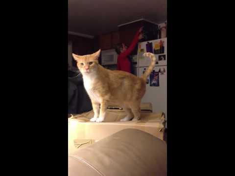 Cat FAIL Into Box