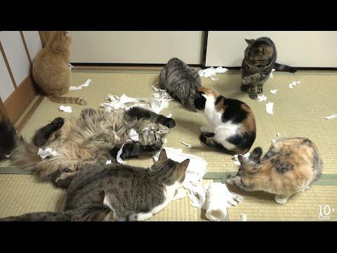トイレットペーパーでいたずらする猫たち