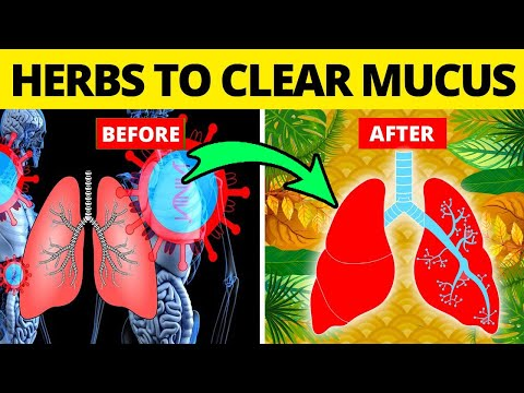 5 Herbs for Lung Health, Clearing Mucus // lung herbs