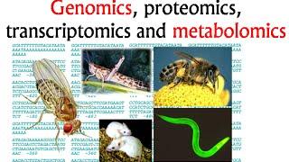 Genomics and proteomics, transcriptomics and metabolomics