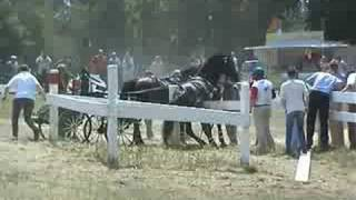 Carriage horse problem 04