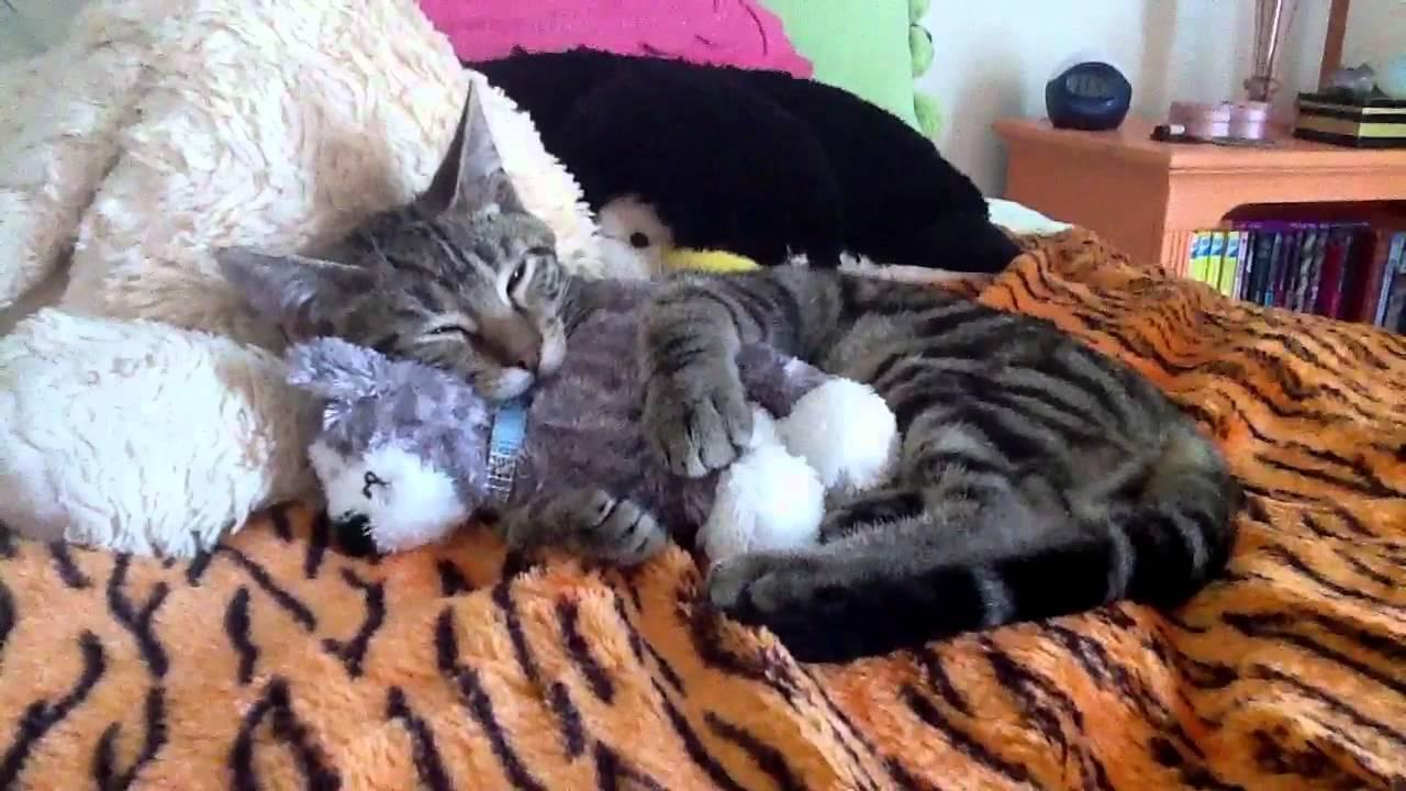 Kitten Hugging A Stuffed Animal Watch Youtube