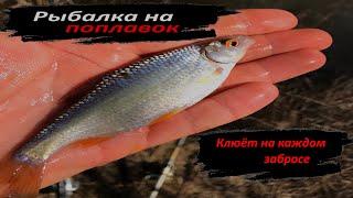 Рыбная ловля на поплавочную снасть Рыбалка на реке