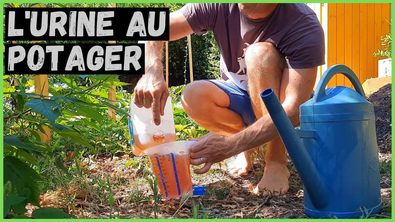 Download L' URINE au potager ► Source d'ABONDANCE