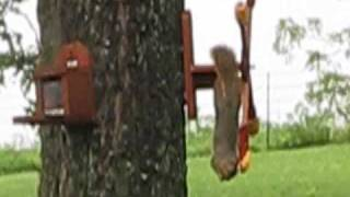 Squirrel Corn Feeder Help Beatles