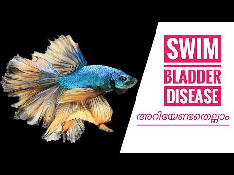 Swim Bladder Disease Treatment