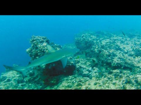 Galapagos, Shark, Eagle Ray, freedive, Snorkeling