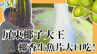 夏日消消暑 到屏東喝椰子水 吃椰子生魚片?! 達人超強爬樹絕活 鋸樹生吃半天筍|精選|在台灣的故事taiwanstory