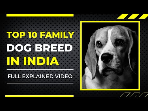 Top 10 family dog breed in india with price in hindi ( dog price )