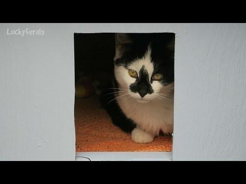Raccoon Proof Feral Cat Feeder Setup Doovi