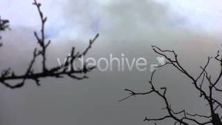 Stock Footage - Dry Twigs In The Wind And Cloudy Sky 04 | VideoHive