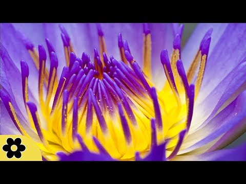 Reiki Meditation Music, Soothing Music, Relaxing Music Meditation, Reiki, Binaural Beats, ✿3232C