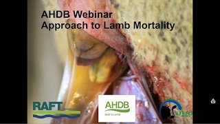 Webinar: Reducing Lamb Losses