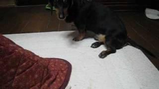 2009年5月18日、ダックが怪我をして下半身麻痺で歩けなくなりました。 ...