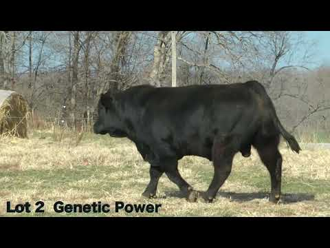 Lot 2 D322 J&K Genetic Power