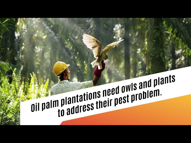 How does a sustainable plantation keep pests away?