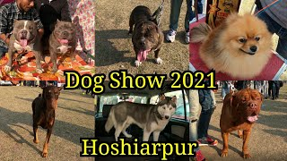 Dog Show Hoshiarpur 2021   Kennel Club Of India   Hoshiarpur Kennel Club