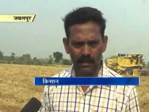रिकॉर्ड: जबलपुर में किसान ने एक एकड़ खेत में किया 57 क्विंटल धान का उत्पादन
