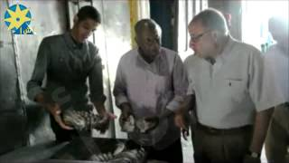 بالفيديو:محافظ اسوان يوجه الى سرعة الانتهاء من احلال وتجديد مصنع صيد الاسماك