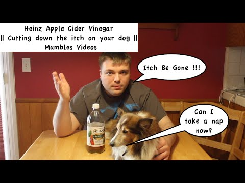 heinz-apple-cider-vinegar-  -cutting-down-the-itch-on-your-dog-  -mumbles-videos