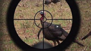 Turkey Hunting Tips: The Best Turkey Call (#77) @GrowingDeer.tv