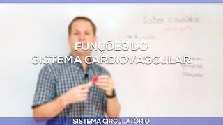 É seguintes cardiovascular sistema do função das uma qual opções