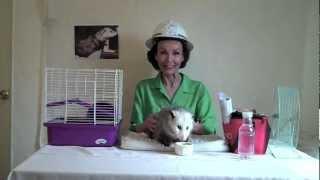 Proper Opossum Emergency Preparedness