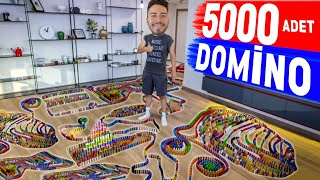 5000 TANE DOMİNO TAŞI DİZDİK !?