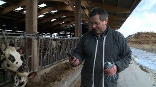 Elevage: des SMS pour surveiller les vaches