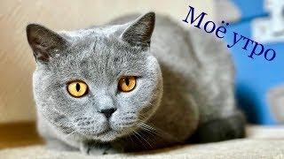 УТРО БРИТАНСКОГО КОТА ГАРРИ / British cat morning