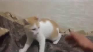 Что делать, если кот погрыз зарядку