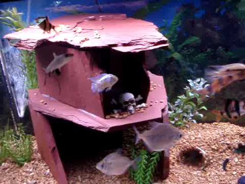 75 gallon fish tank with new home made slate cave youtube for Fish tank caves