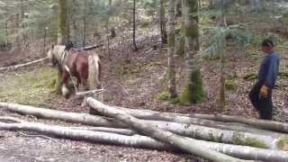 débardage avec chevaux comtois jura