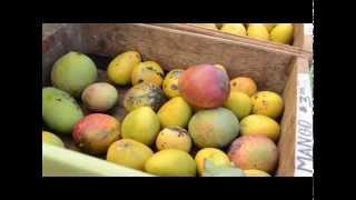 Tasting Kauai's Farmers Markets - Mangos