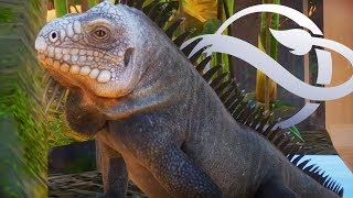 IGUANAS!! EXTENDED Gameplay Trailer Analysed   Planet Zoo Update