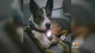 Service Dog Wounded in East Bay Freeway Shooting Dies
