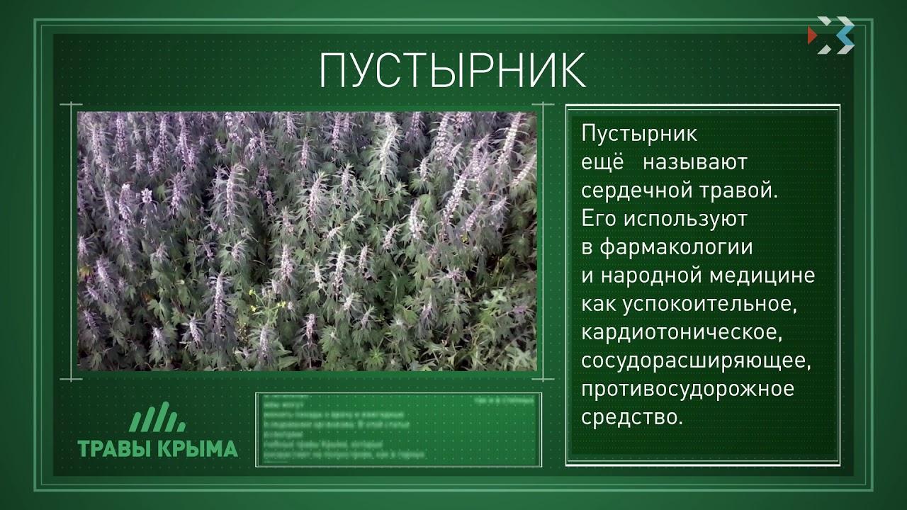лекарственные травы крыма фото и описание дело осуждённого