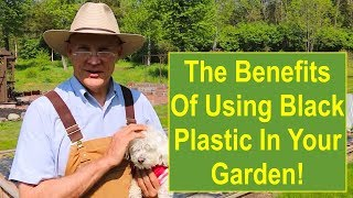 The Benefits of Using Black Plastic Mulch in Your Vegetable Garden