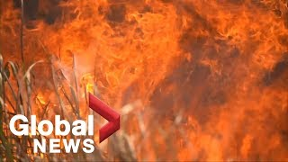 Fires continue to burn in Amazon as Brazil's Bolsonaro rages at France's Macron