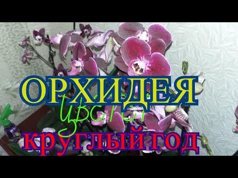 Почему мои орхидеи цветут круглый год?!!!.....