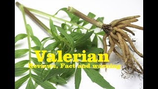 valerian -valerian root reviews,fact & warning
