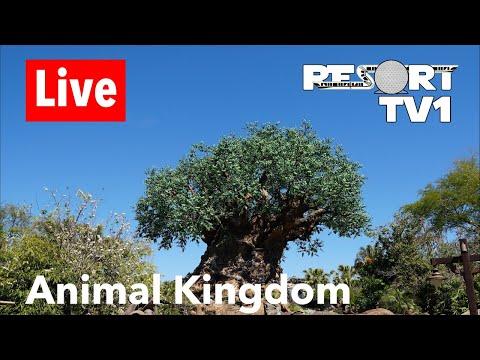 Animal Kingdom Live Stream - 5-11-18 - Walt Disney World