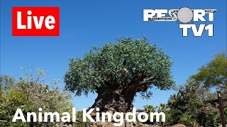 Animal Kingdom Live Stream - 5-11-18 - Walt Disney World