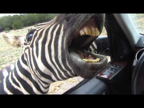 Thumbnail: Natural Bridge Wildlife Ranch, San Antonio