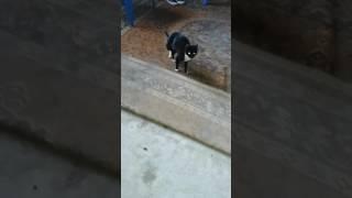 Кошечка с вывихом застарелым.