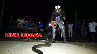 King Cobra Rescue From: Dhamara, Bhadrak, Odisha