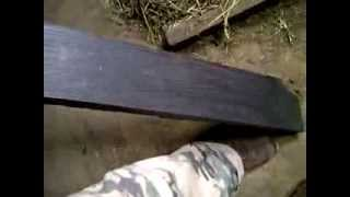 Bog Oak, Black Wood Bogwood